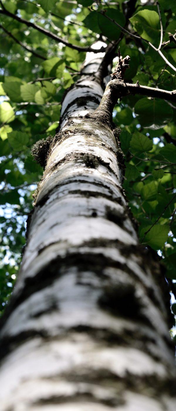 bark-branch-low-angle-shot-1325031